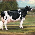 Ideal Holstein Cow